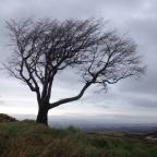 Tree of Death.